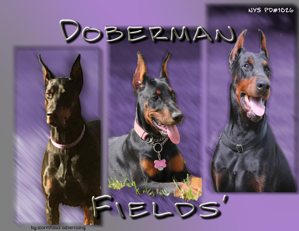 Doberman Fields